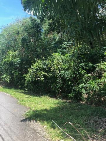 Camino Los Ortiz Bo. Guanajibo Mayaguez, PR 00682
